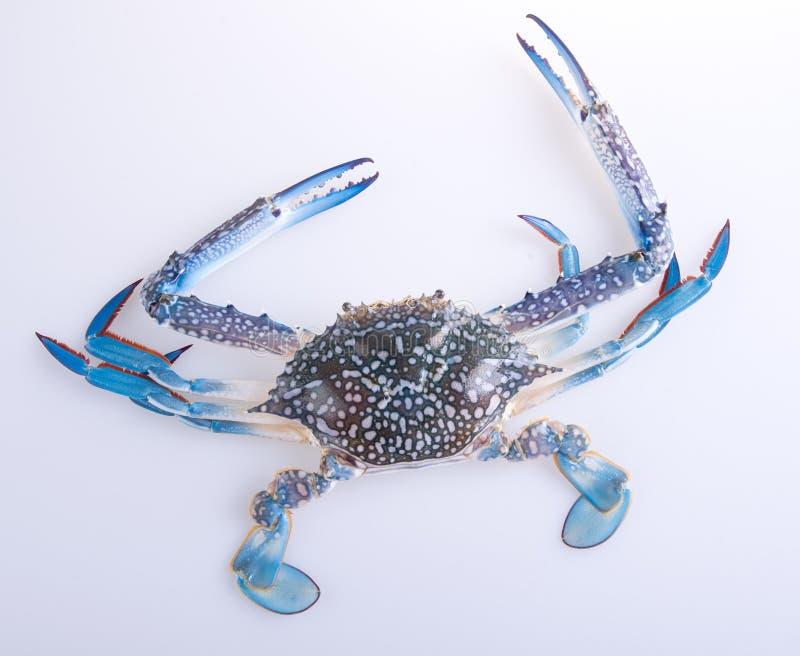 Krabbor krabbor på bakgrunden krabbor på bakgrunden royaltyfri bild