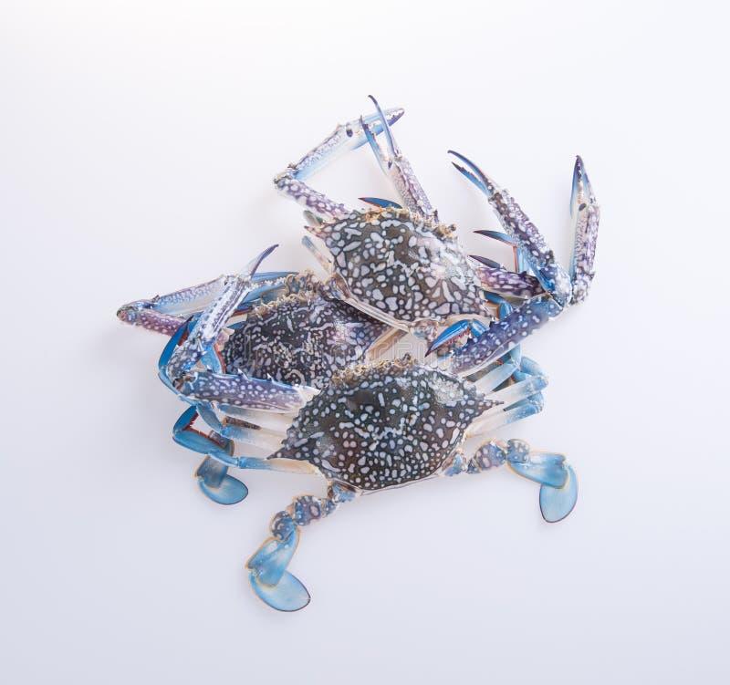 Krabbor krabbor på bakgrunden krabbor på bakgrunden arkivfoto