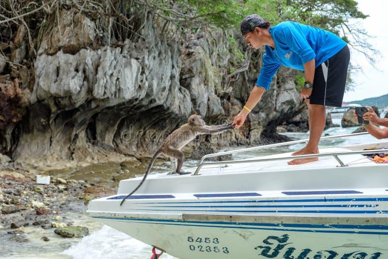 Krabi, Tailândia - 5 de abril de 2017: Macaco de alimentação do alimento do guia dos homens na praia do macaco imagem de stock