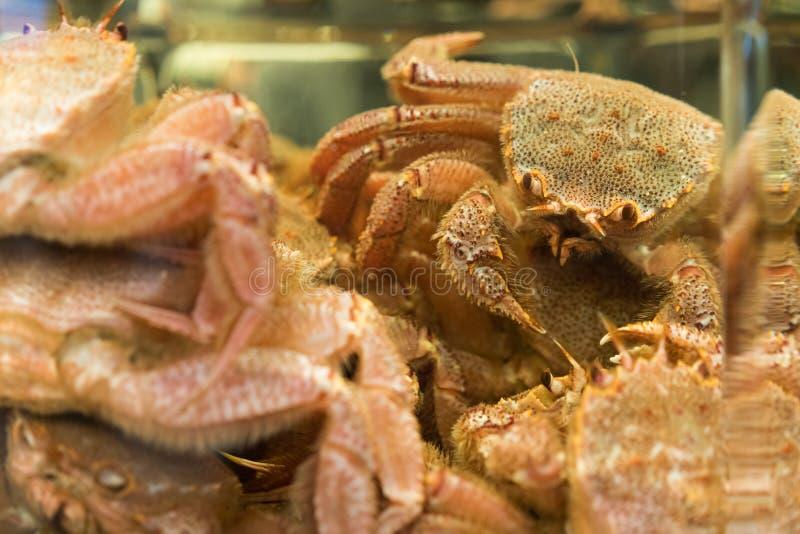 Kraby zdjęcie stock