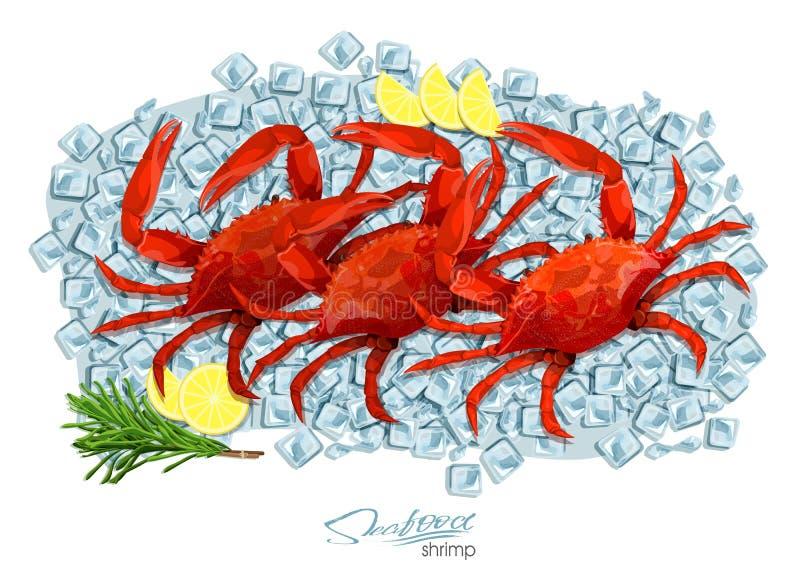 Kraby z rozmarynami i cytryną na kostkach lodu Wektorowy illustrationin kreskówki styl Owoce morza produktu projekt mieszkaniec ilustracja wektor