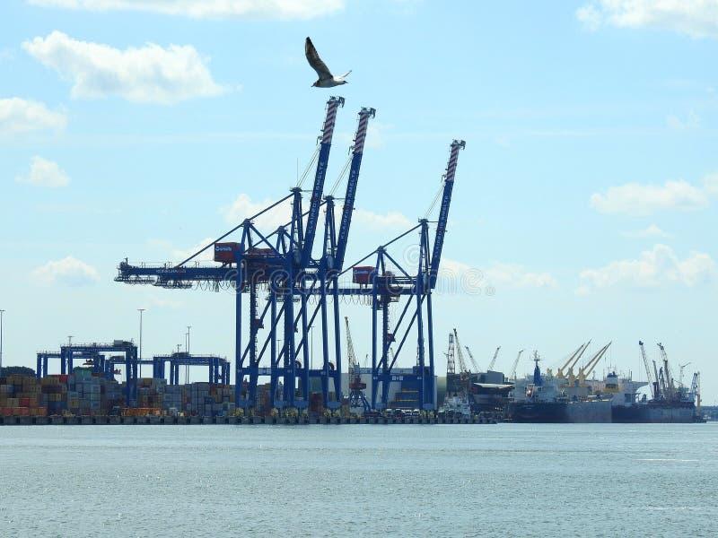 Kraftig kran i Klaipeda port, Litauen royaltyfria bilder