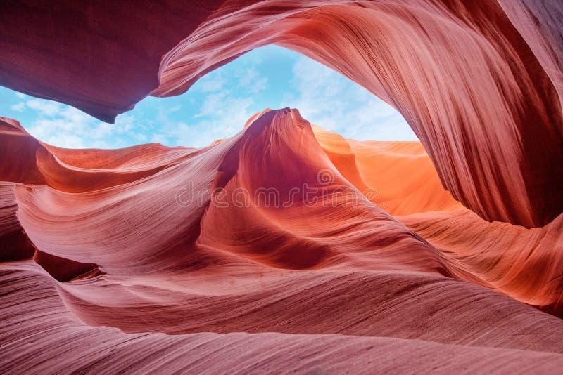 Kraftig och magisk kanjonantilop, Arizona USA arkivfoto