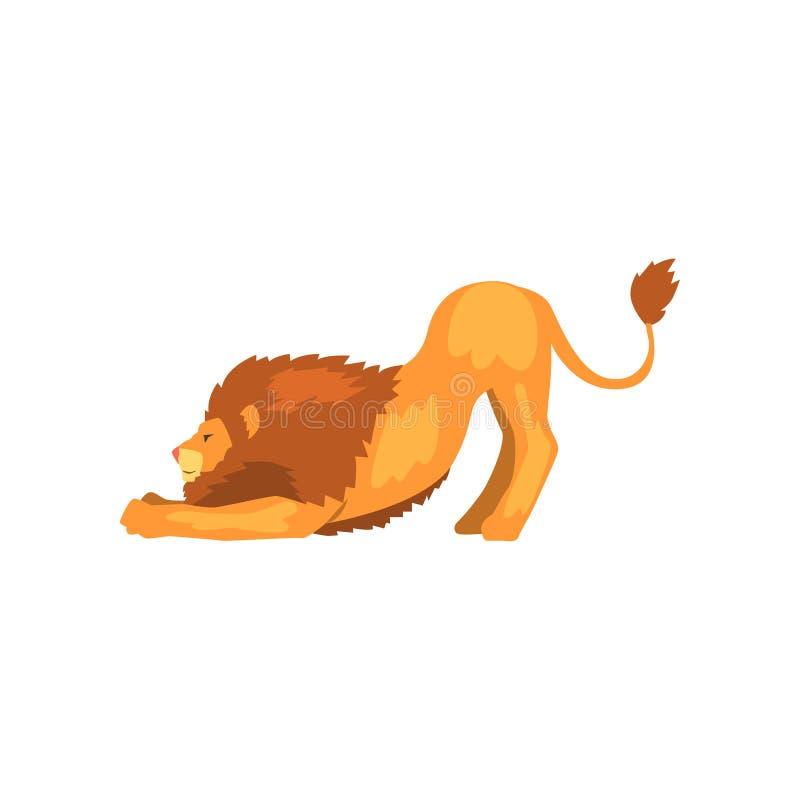 Kraftigt lejon som sträcker, lös vektorillustration för rov- djur på en vit bakgrund royaltyfri illustrationer