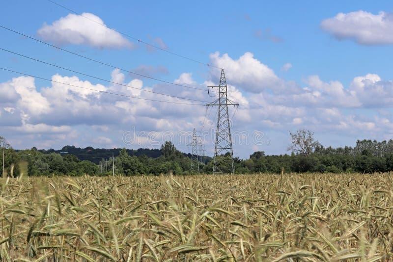 Kraftledning på fältet av råg och korn Mognad av den agrariska sektoren för framtida skörd av den jordbruks- branschen Växt f royaltyfri bild