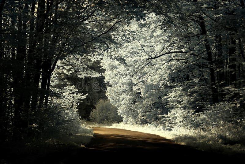 kraj drogi lasowej skrzyżowanie zdjęcie royalty free