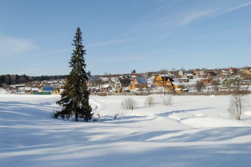 Kraj zimy krajobraz z odludnym jedlinowym drzewem zdjęcia royalty free