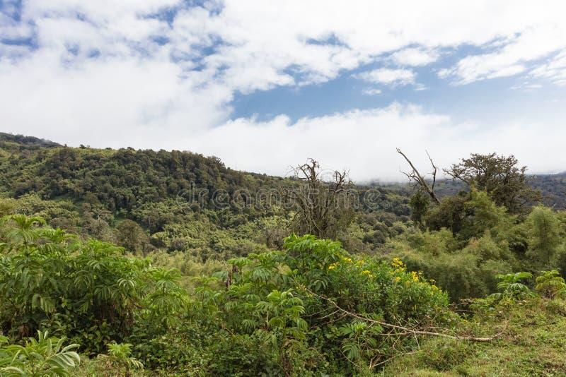 Krajobraz Aderdare góra Niebieskie niebo nad jaskrawym - zielona dżungla Kenja fotografia stock