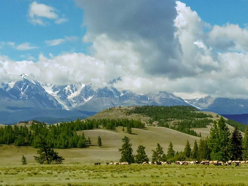 Krajobraz Altay góry, Rosja, widok od Chuysky obszaru północy grań zdjęcia stock