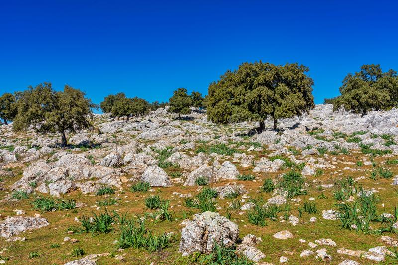 Krajobraz blisko Cuevas Del Becerro w gubernialnym Malaga, Andalusia, Hiszpania obraz stock