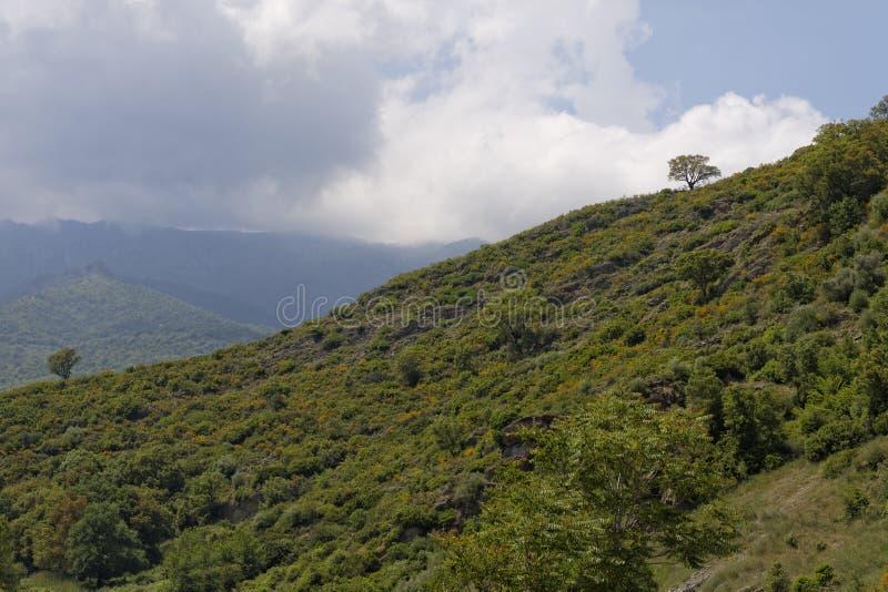 Krajobraz blisko Ponte Novu, Środkowy Corsica, Francja, Europa fotografia royalty free