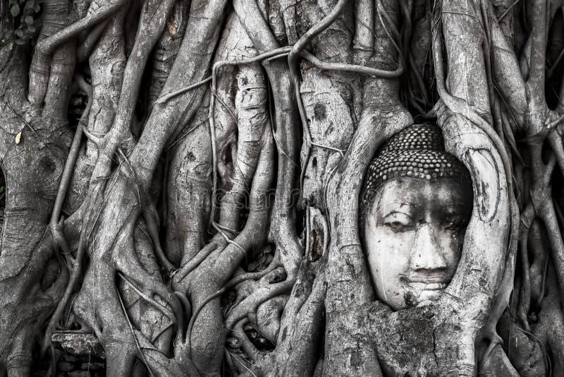 Krajobraz, Buddha Kierowniczy Drzewny Wat Maha Który Buddha statua łapać w pułapkę w Bodhi Drzewnych korzeniach dziejowy ayutthay zdjęcia royalty free