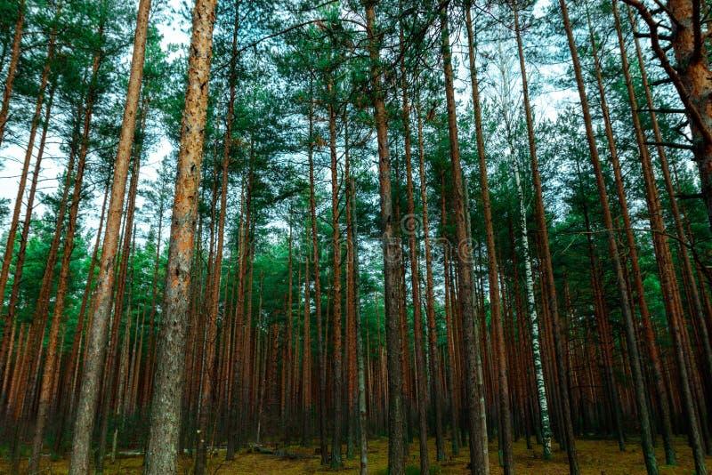 Krajobraz drewno, opóźniona jesień zdjęcia royalty free