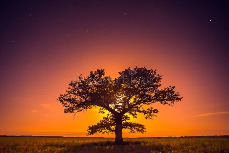 Krajobraz drzewo z ciepłym księżyc światłem, kontemplacja zdjęcie stock