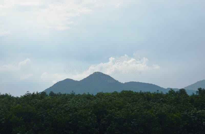Krajobraz góra za drzewną linią w słonecznym dniu zdjęcie royalty free