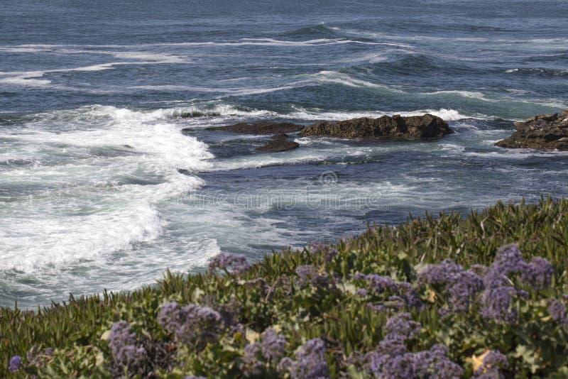 Krajobraz i widok na ocean los angeles Jolla, Kalifornia w San Diego zdjęcie stock
