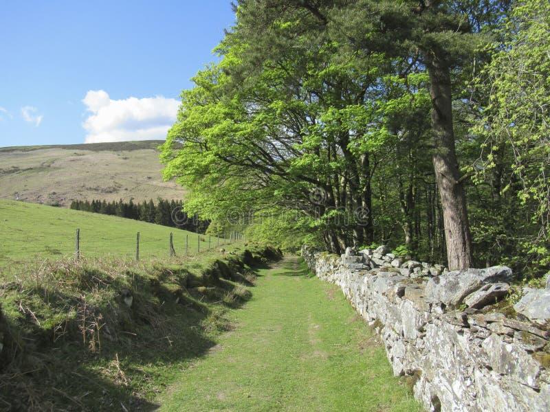Krajobraz Irlandia Kamienna ściana wzdłuż drogi obrazy stock