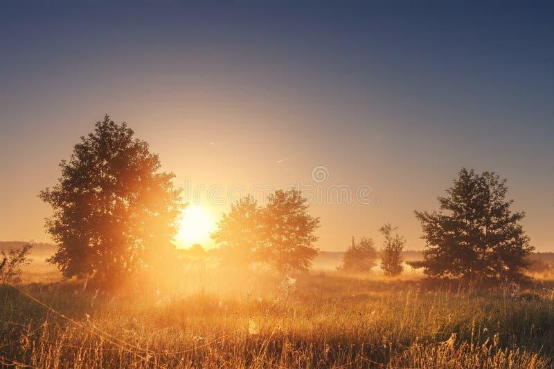 Krajobraz jaskrawy wschód słońca nad lato mglistą łąką z drzewami na jasnym ranku Naturalna wiejska scena złoty pole zdjęcie royalty free