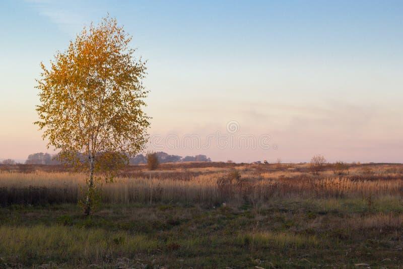 Krajobraz jesieni drzewa z kolorem żółtym i pomarańcze opuszcza w polu fotografia stock