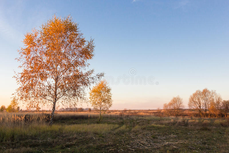 Krajobraz jesieni drzewa z kolorem żółtym i pomarańcze opuszcza w polu obraz stock