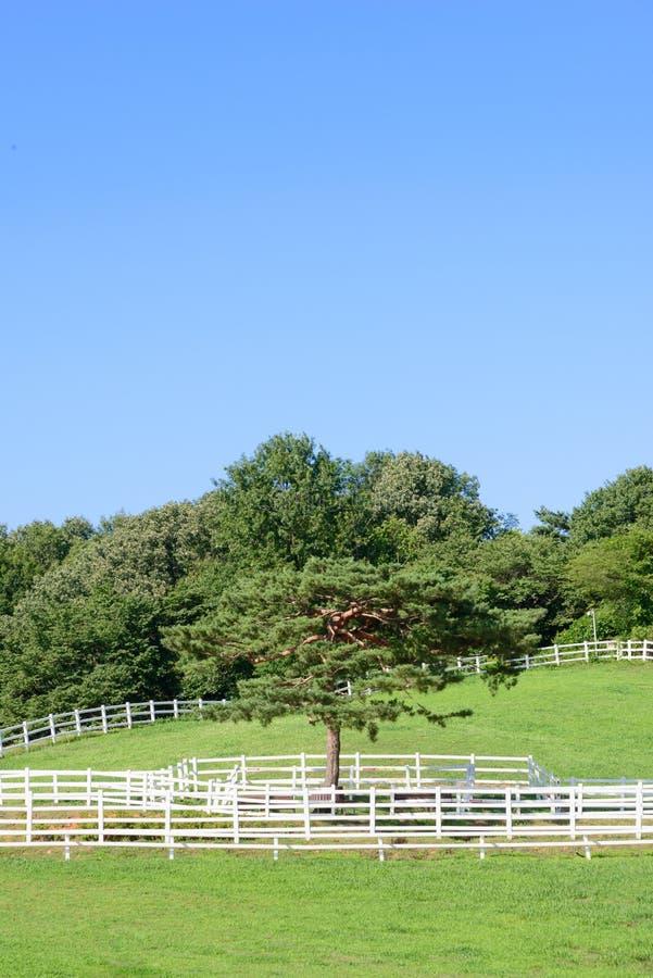 Krajobraz koński rancho i pojedyncza sosna zdjęcie stock