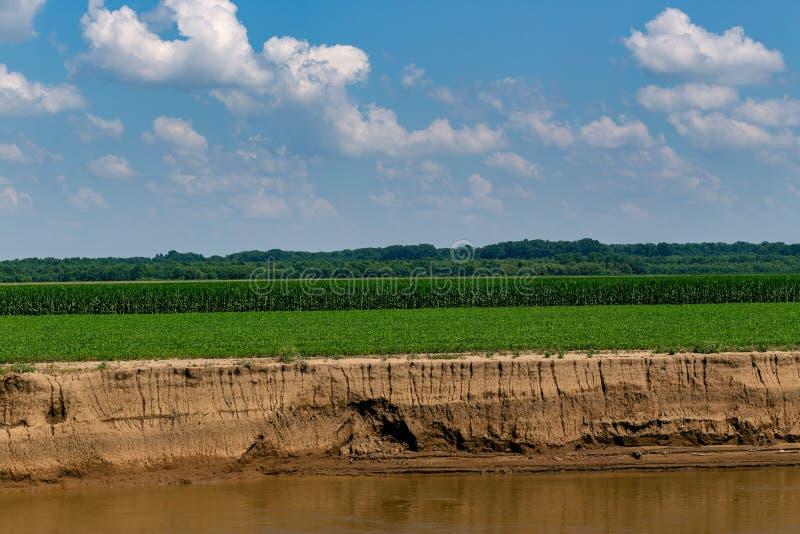 Krajobraz Kukurydzanego pola zieleń zdjęcia stock