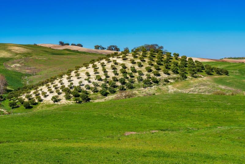 Krajobraz Madrigueras w sierrze de Grazalema, Andalusia, Hiszpania obrazy royalty free