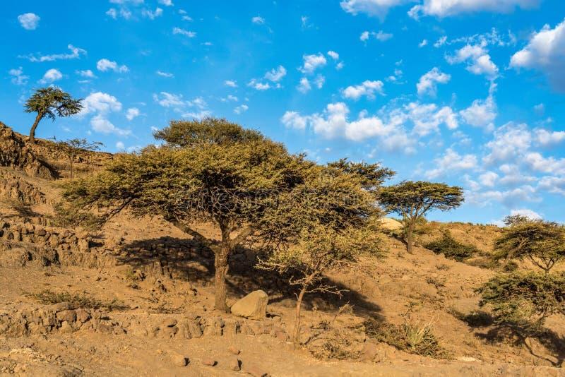 Krajobraz mi?dzy Gheralta i Lalibela w Tigray, Etiopia, Afryka fotografia stock