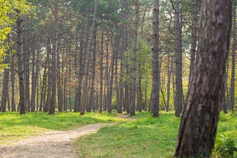 Krajobraz miasto park z jedlinami i zielonym gazonem obrazy stock