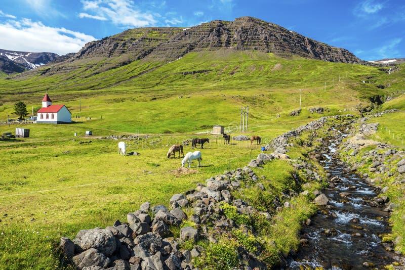 Krajobraz Mjoifjordur wioska z wodnym strumieniem przy dobrem, konie w zielonej łące i kościół przy lewicą, zdjęcie royalty free