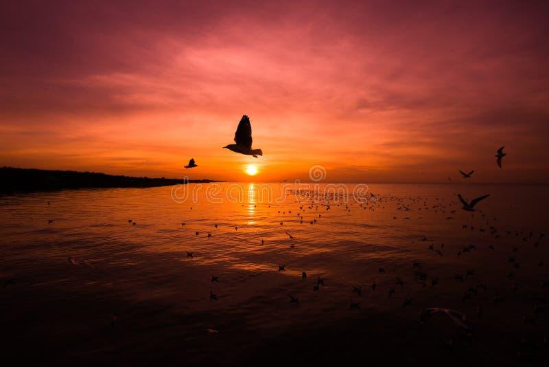 Krajobraz morze przy wschodem słońca, sylwetka latający ptaki przy zmierzchem zdjęcie stock