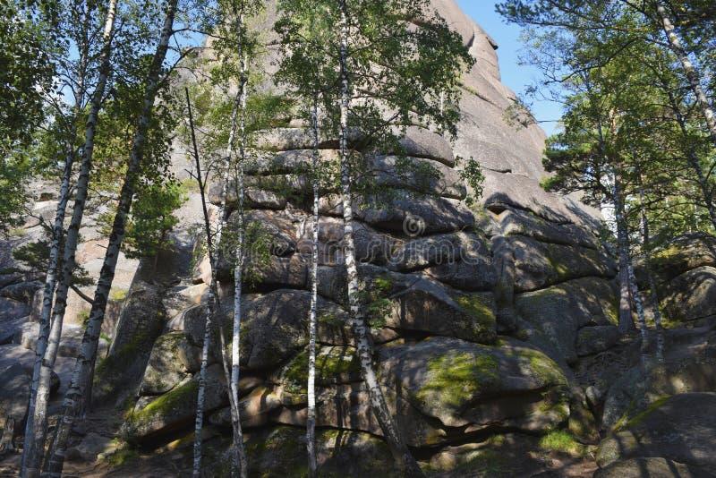 Krajobraz na wzgórzu i skały w zwartym lesie obrazy royalty free