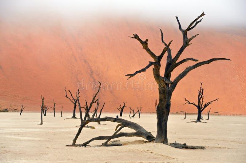 Nieżywy Vlei, Namibia, Południowa Afryka zdjęcie stock