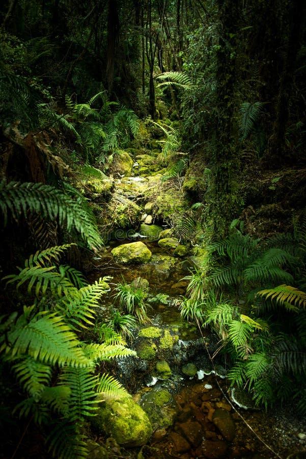 Krajobraz Nowa Zelandia fotografia stock