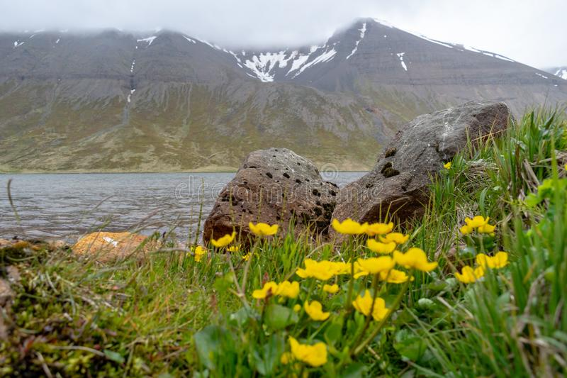 Krajobraz od odległej ziemi - Iceland zdjęcia stock