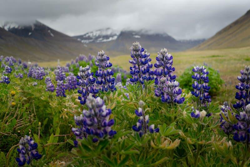 Krajobraz od odległej ziemi - Iceland fotografia royalty free