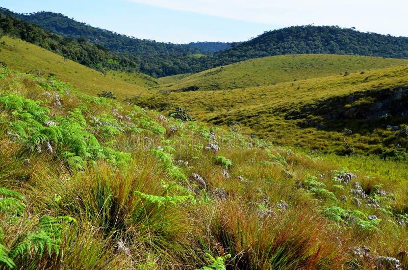 Krajobraz parka narodowego Horton równiny obraz stock