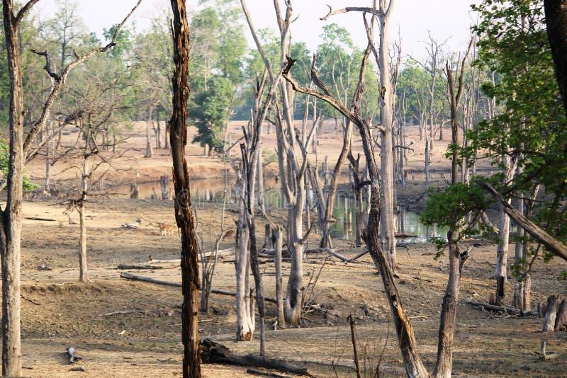 Krajobraz pench park narodowy, madhyapradesh, ind obrazy royalty free