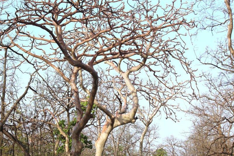 Krajobraz pench park narodowy, madhyapradesh, ind, teren tigeress wymieniał langdi fotografia stock