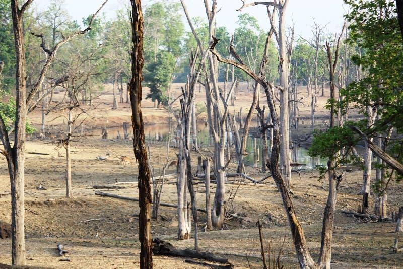 Krajobraz pench park narodowy, madhyapradesh, ind, teren tigeress wymieniał langdi fotografia royalty free