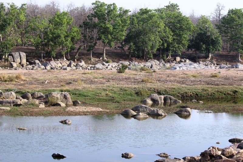Krajobraz pench rzeka przy pench parkiem narodowym, madhyapradesh, ind, teren tygrysi odpoczywać w wodzie zdjęcia stock