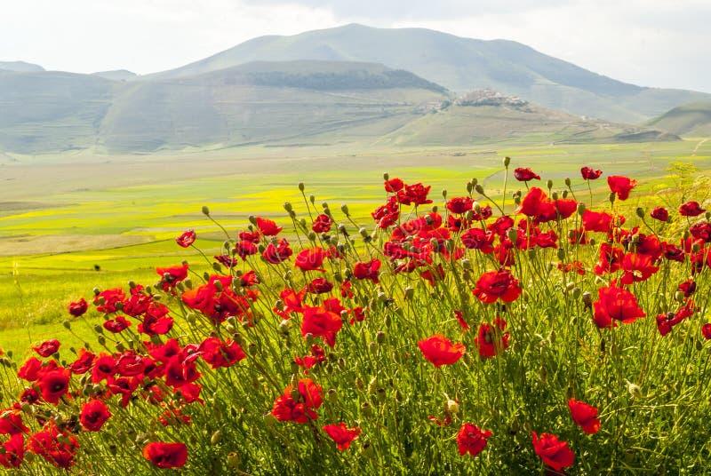 Krajobraz Pianino Di Castelluccio fotografia royalty free