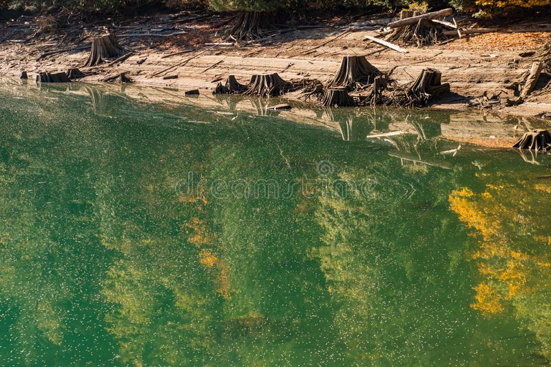 Krajobraz Piekarniana jezioro woda zakrywająca z pollen i spadać drzew ziarnami w Północnych kaskadach, zdjęcia royalty free
