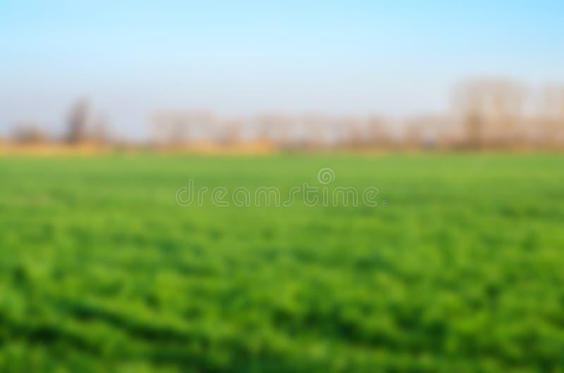 Krajobraz, pole z zieloną trawą i niebieskie niebo, zamazany tło dla projekta, zdjęcie royalty free