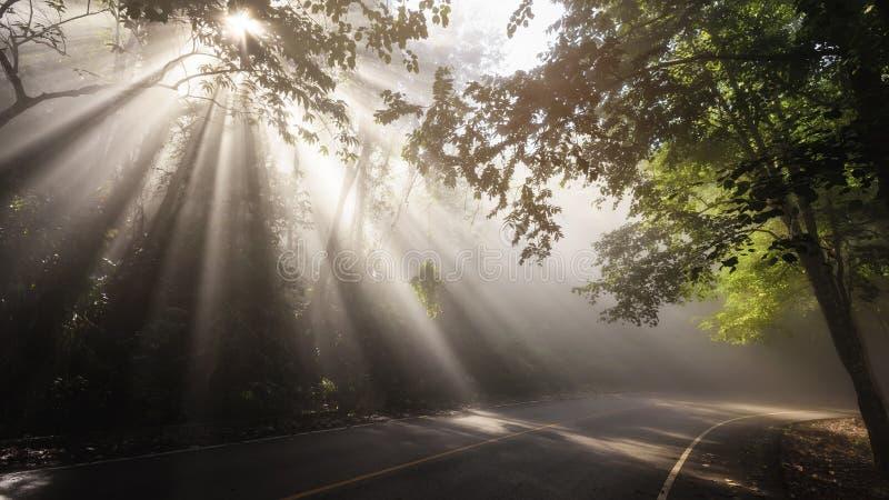 Krajobraz promienie przez drogi i lasu zdjęcia stock