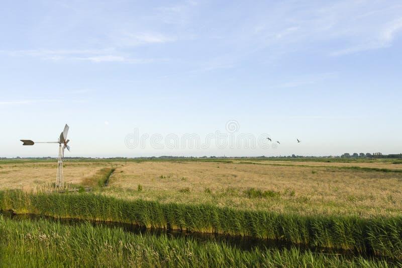 Krajobraz przy Wormer- en Wisperveld fotografia royalty free