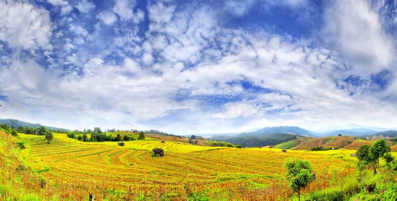 Krajobraz ryżowi pola zdjęcia royalty free