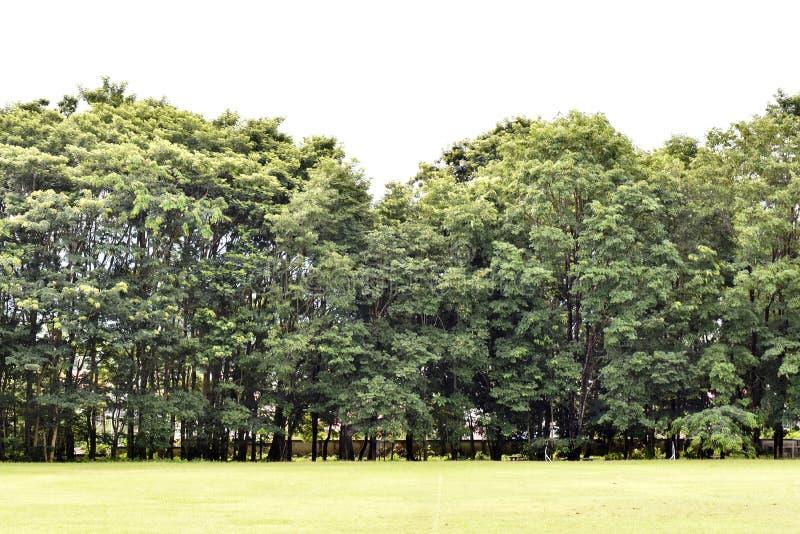 Krajobraz społeczność las obraz royalty free