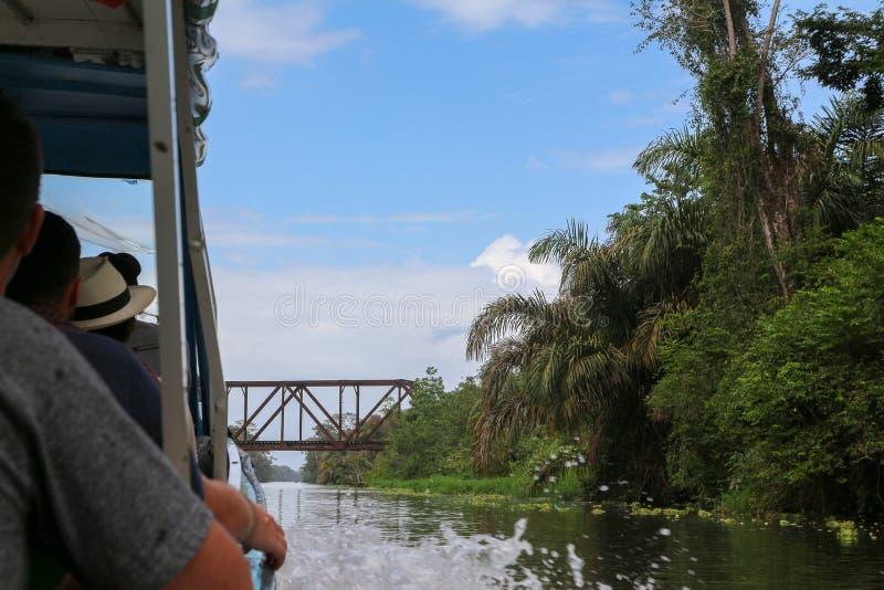 Krajobraz tropikalny tropikalny las deszczowy w Tortuguero, Costa Rica fotografia stock