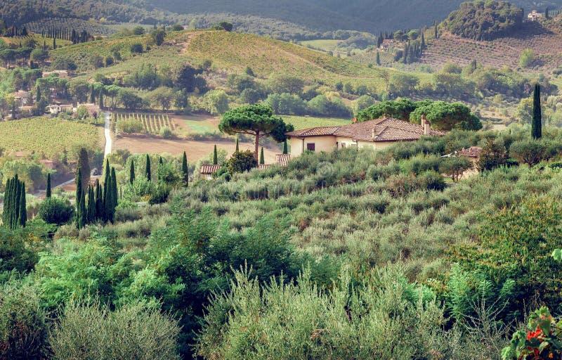 Krajobraz Tuscany z ogrodowymi drzewami, willą, zielonymi wzgórzami i sosnami, Włoska wieś obraz royalty free